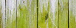 Algae growing on wooden fence