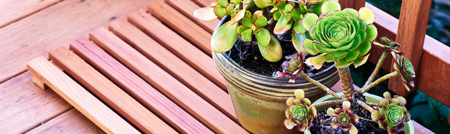 Potted Plants to Decorate Old Deck