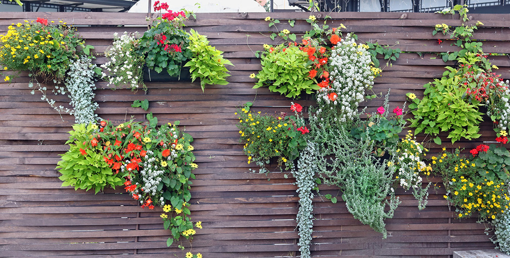 Living Garden Wall to Increase Privacy