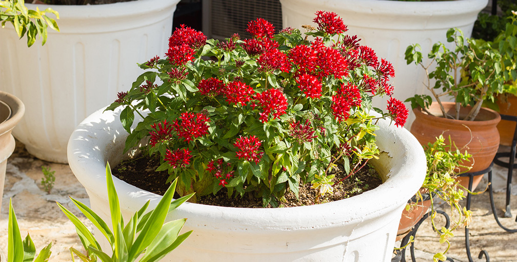 Red Potted Plant on Backyard Deck