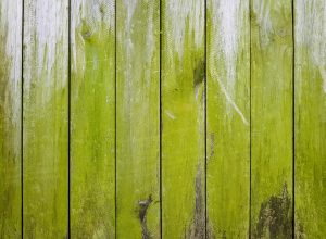 Fence with mold and algae